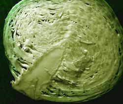 Рецепт салата из капусты 1