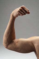 Наращивая мускульную массу, мы стимулируем сжигание жира!