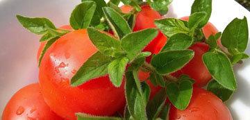 помидор является основой для всех видов кетчупа