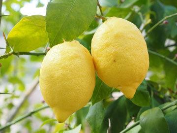 Лимонная диета выводит токсины
