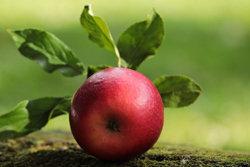 7. Яблоки и груши
