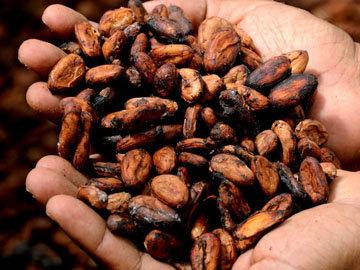Какао - подарок богов