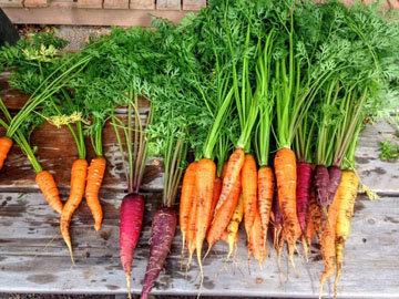 не переусердствуйте с морковью