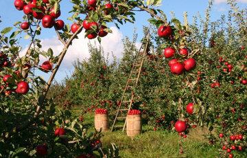 потребление местных сезонных продуктов
