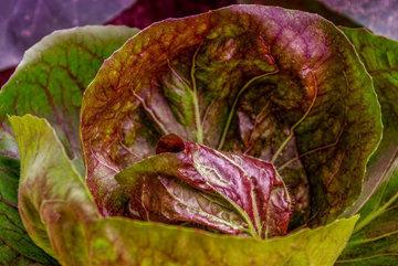 Питательная ценность салатов