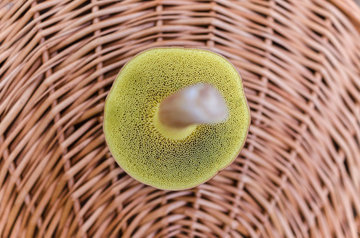 Обогащайте грибы на солнце витамином D