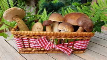 Витамин D из грибов