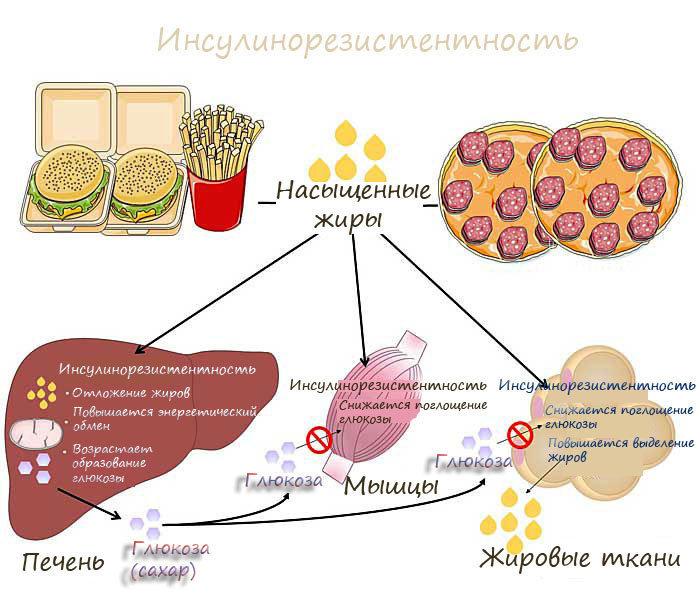Действие инсулина на липидный обмен