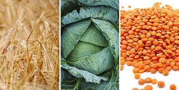 grain-green-bean
