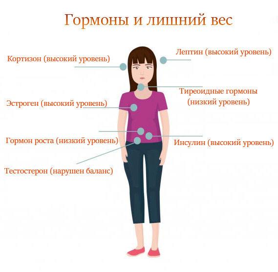 Гормон тестостерон за что отвечает у женщин