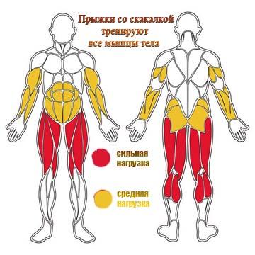 Прыжки со скакалкой тренируют все мышцы тела