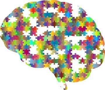 Что любит мозг