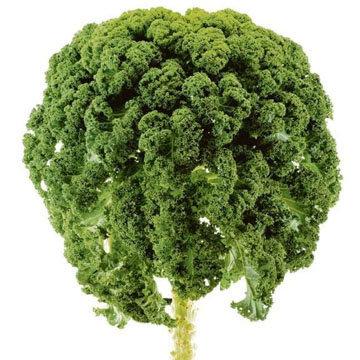 Кале - это быстрорастущий вид листовой капусты