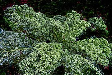 Зимний чудо-овощ