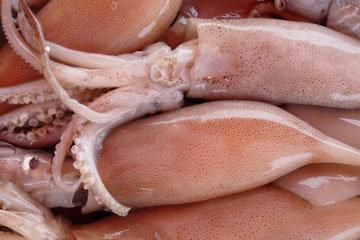 Что нужно знать о кальмарах