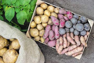 крупы и картофель