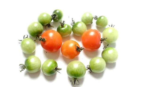 Незрелые помидоры