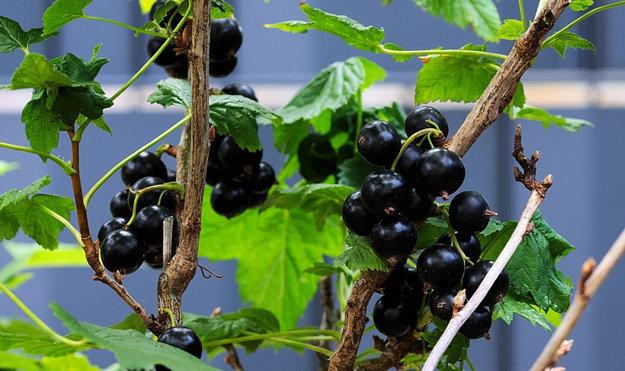 Овощи и фрукты надо есть свежими
