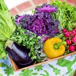 Допускается употребление 28 сортов овощей