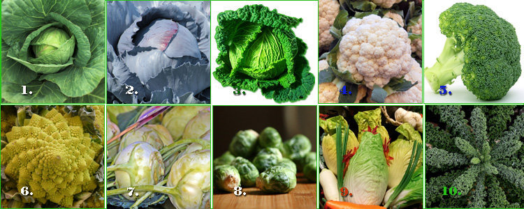 Различные сорта капусты - основа капустной диеты