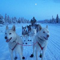 питание эскимосов