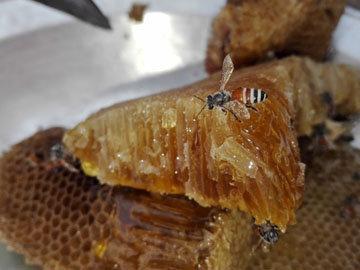 Мед польза