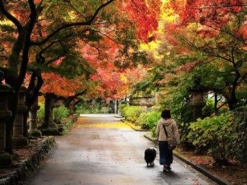 Заведите собаку и гуляйте с ней