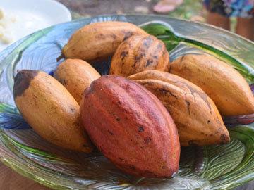 Какао польза его давно известна