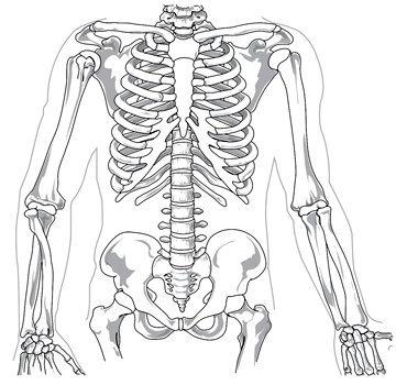 Кальций, магнезия и витамин Д - без этого наши кости не будут здоровыми