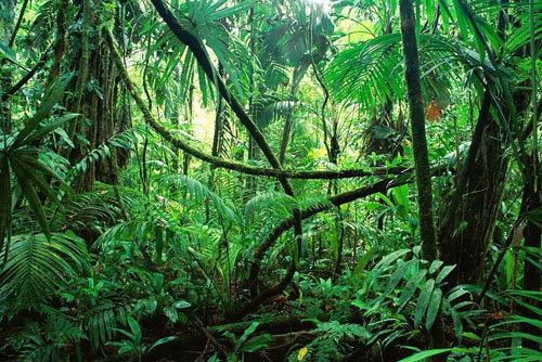 Диета на рисе - диета джунглей