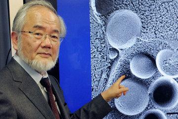 Японец Ёсинори Осуми получил Нобелевскую премию по медицине в 2016 году