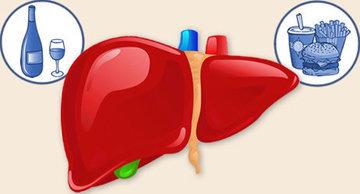 Печень участвует в обмене жиров, углеводов и белков
