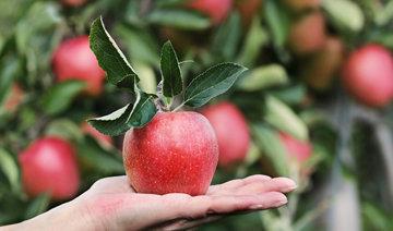 Но сколько фруктов полезно для здоровья