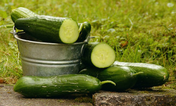 Огурцы полезны для нашего здоровья