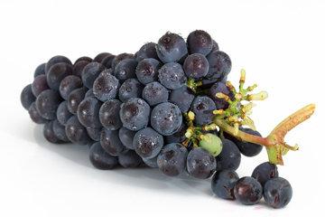фрукты содержат не только фруктозу, но и глюкозу